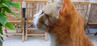 Votre chat fait exprès de vous ignorer !