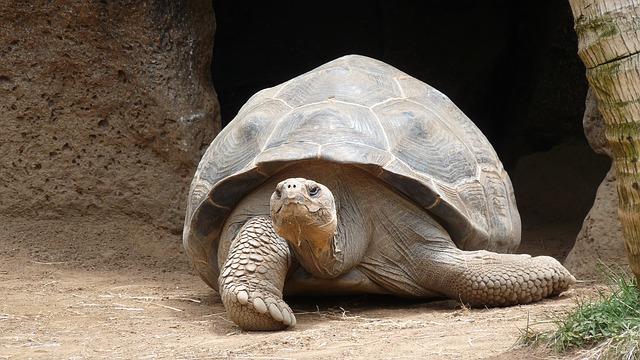 tortue-marine-géante