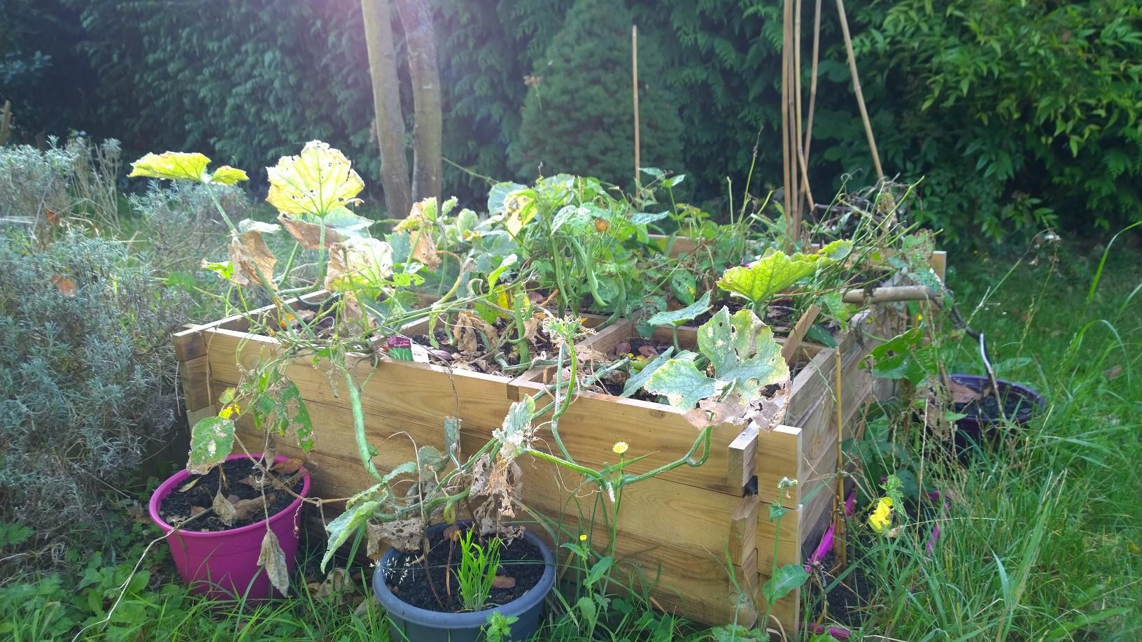 Creer un potager dans le jardin ou sur le balcon for Carre jardin potager