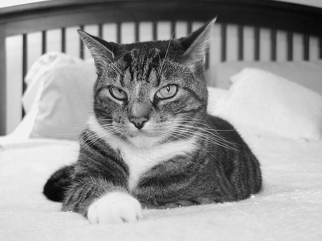 dormir-avec-animal-compagnie